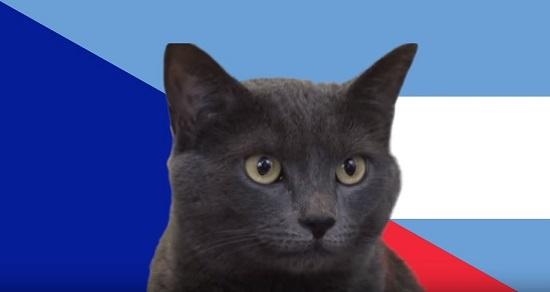 Chú mèo Cass từng dự đoán khá chính xác.